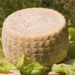 Caprino-abruzzese_prodotti_tipici_abruzzo