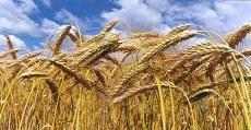 Produttori_prodotti_alimentari_italiani_Italy EAT food il portale dei prodotti tipici italiani