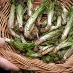 radicchio-di-montagna-prodotti-tipici-friuli-venezia-giulia