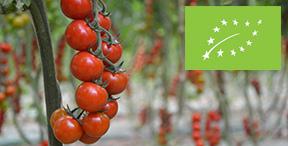 azienda_agricola_biologica_pasquini_suvereto_livorno_agricoltura_biologica_italy_Eat_food