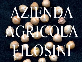 AZIENDA AGRICOLA FILOSINI