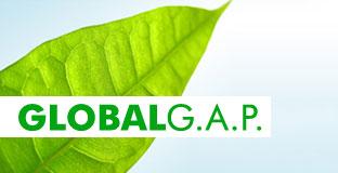 fruit_du_soleil_ducentola_voghiera_ferrara_azienda_agricola_ferrari_mauro_certificazione_global_gap