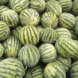 aziende_agricole_ferrara_azienda_agricola_molesini_produttori_produzione_angurie