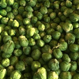aziende_agricole_ferrara_azienda_agricola_molesini_produttori_produzione_broccoli