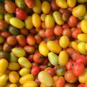 aziende_agricole_ferrara_azienda_agricola_molesini_produttori_produzione_pomodori