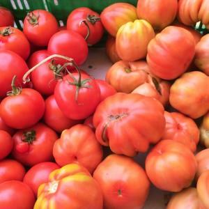 aziende_agricole_ferrara_azienda_agricola_molesini_produttori_produzione_pomodori_da_insalata