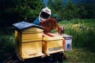 Italian beekeepers