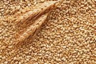 produttori grano italiano