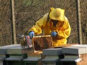 produttori miele italiani