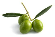 produttori olive