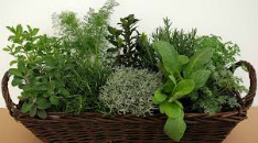 Manufacturers herbs