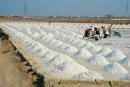 italians salt producers