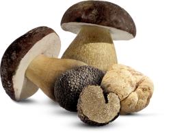 Negozi funghi e tartufi