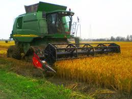 Produttori riso