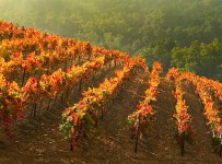 produttori_vini_oltrepo_pavese