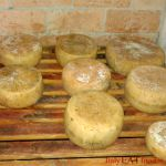 caseifici_basilicata_caseifici_lucani_italy_eat_food