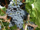 produttori_vini_sardegna