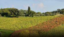 produttori_vini_toscana_italy_eat_food