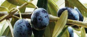 olio_extravergine_di_oliva_toscano_italy_eat_food